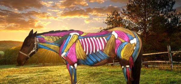 Equine services victoria